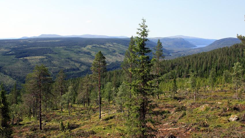 Norsk PEFC Skogstandard